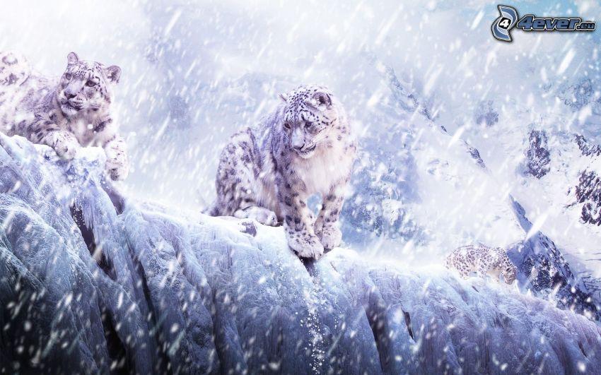 leopardi delle nevi, nevicata
