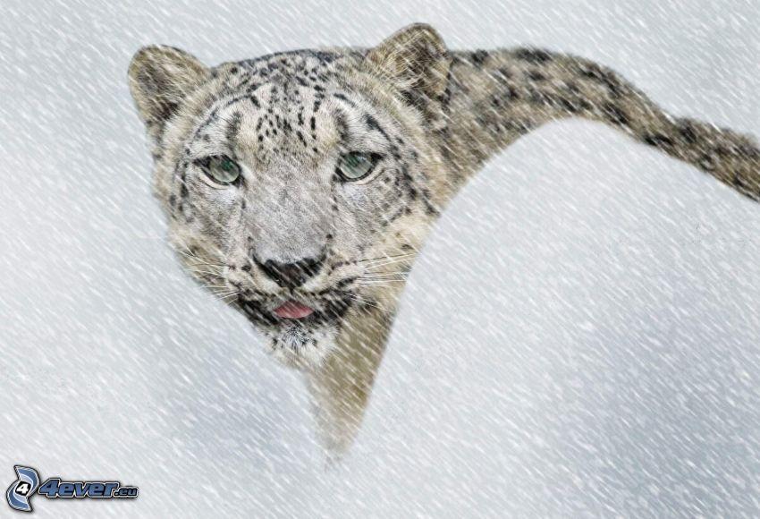 leopardo delle nevi, nevicata