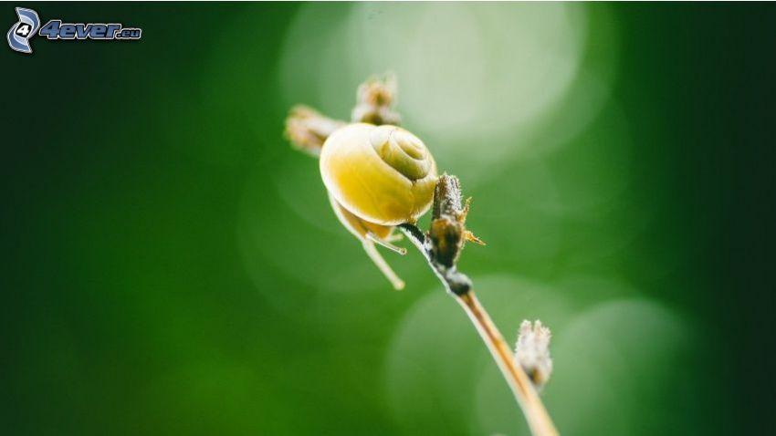 lumaca, pianta