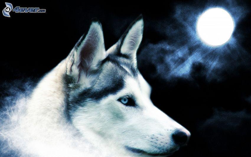 lupo, luna