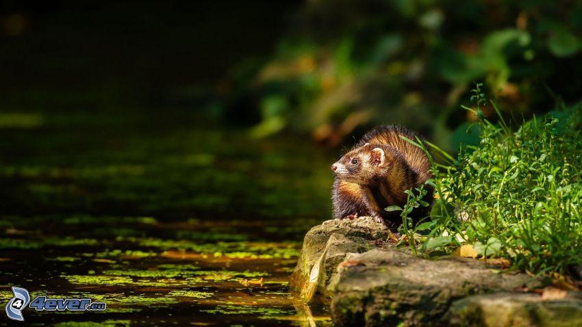Martora, il fiume, sguardo