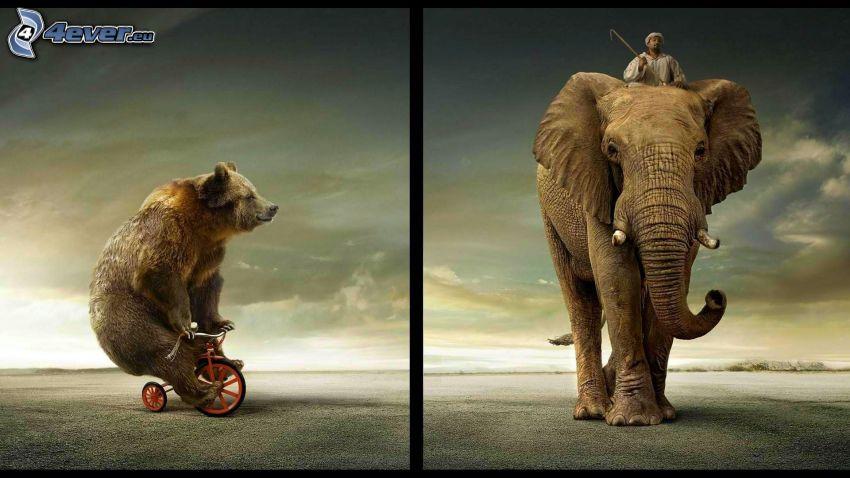 orso, bicicletta, elefante, uomo