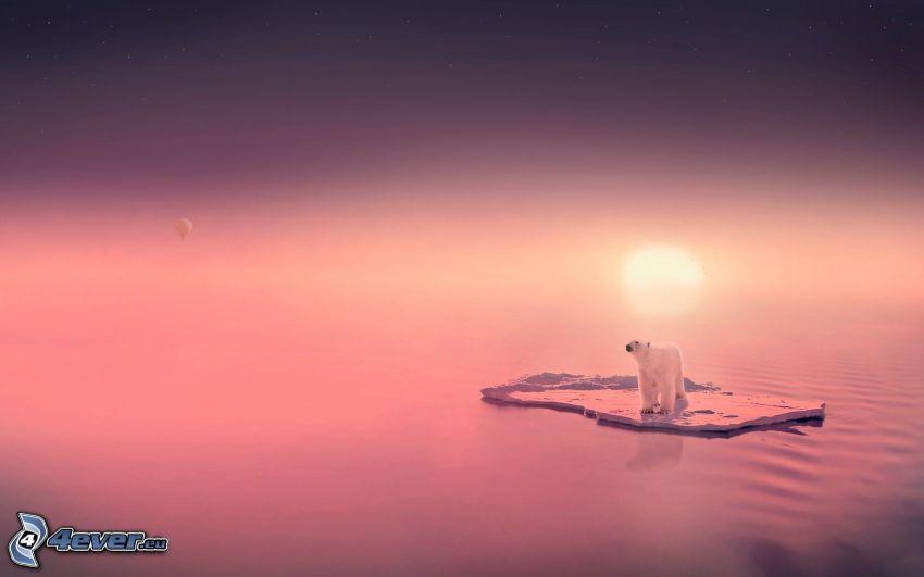 orso polare, lastra di ghiaccio, tramonto viola