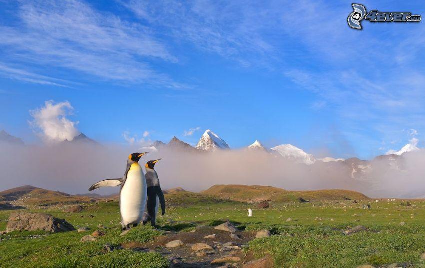 pinguini, ala, nebbia a pochi centimetri dal terreno, montagne innevate