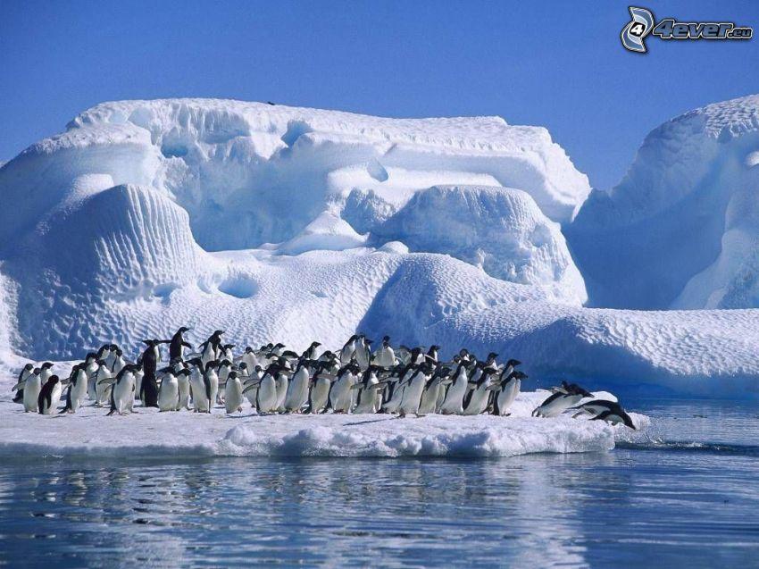 Pinguini saltano in acqua, ghiacciaio, Artide