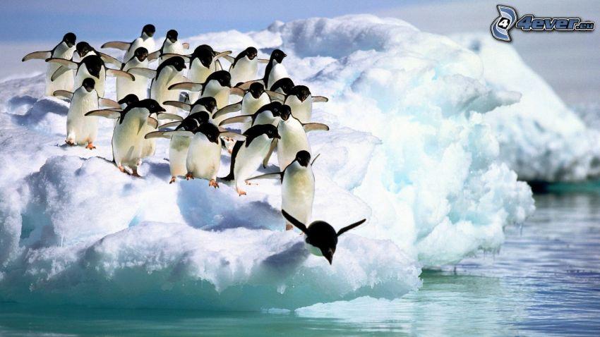 Pinguini saltano in acqua, ghiacciaio