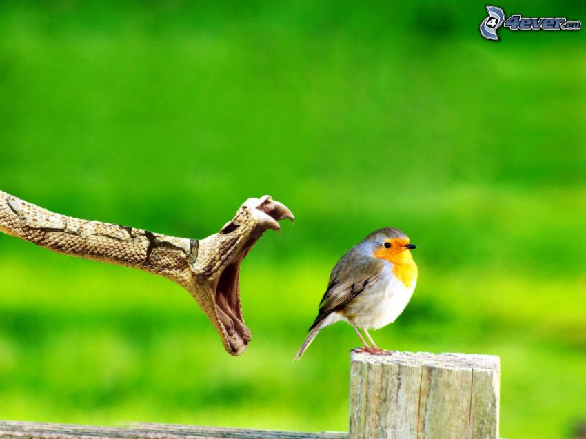 preda, uccello, serpente