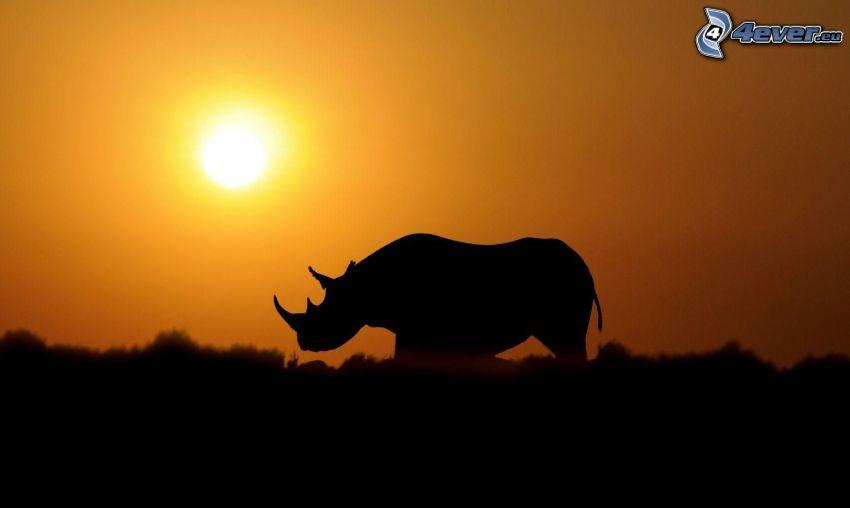 rinoceronte, silhouette, tramonto nella savana