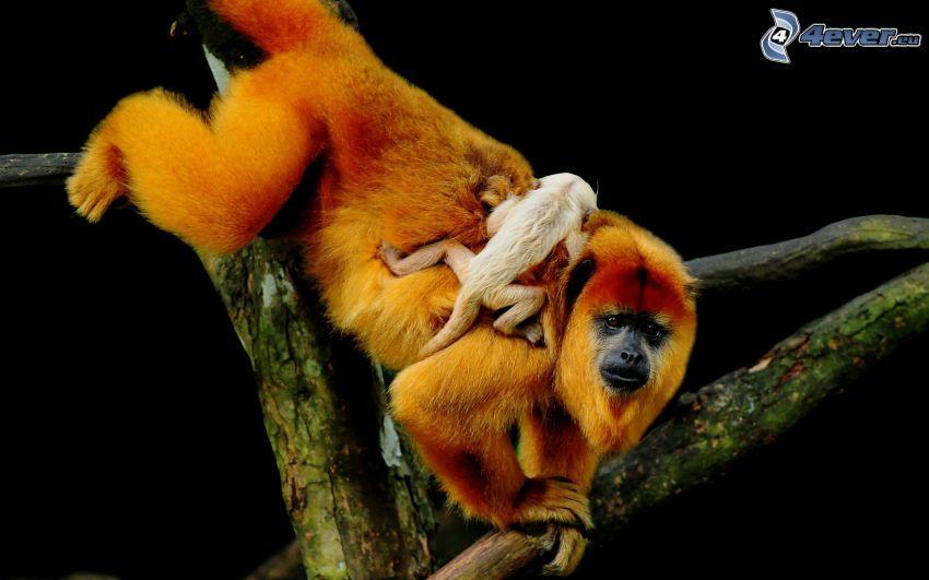 scimmie, cucciolo, ramo