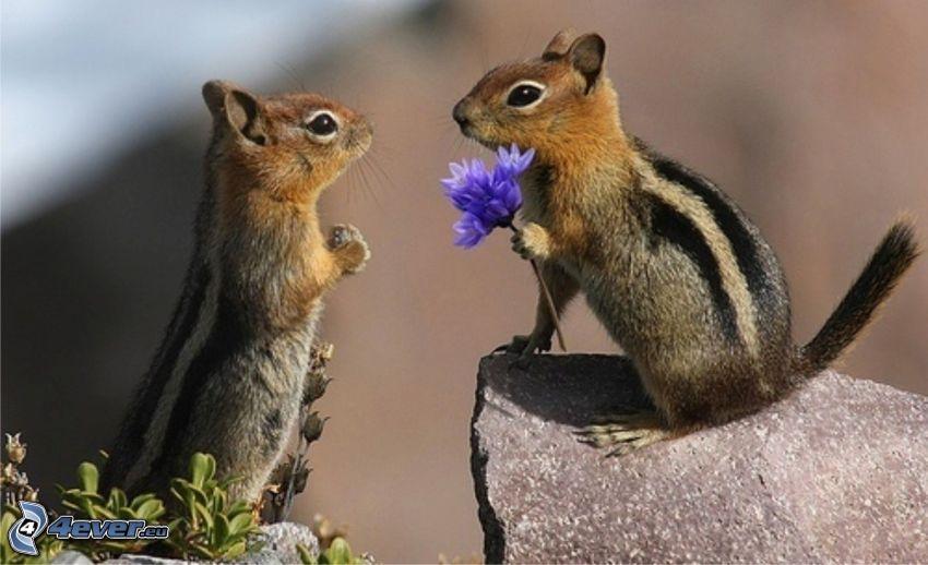 scoiattoli, fiori