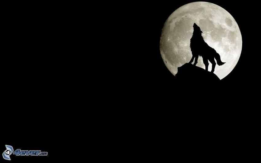 silhuetta di un lupo, luna piena
