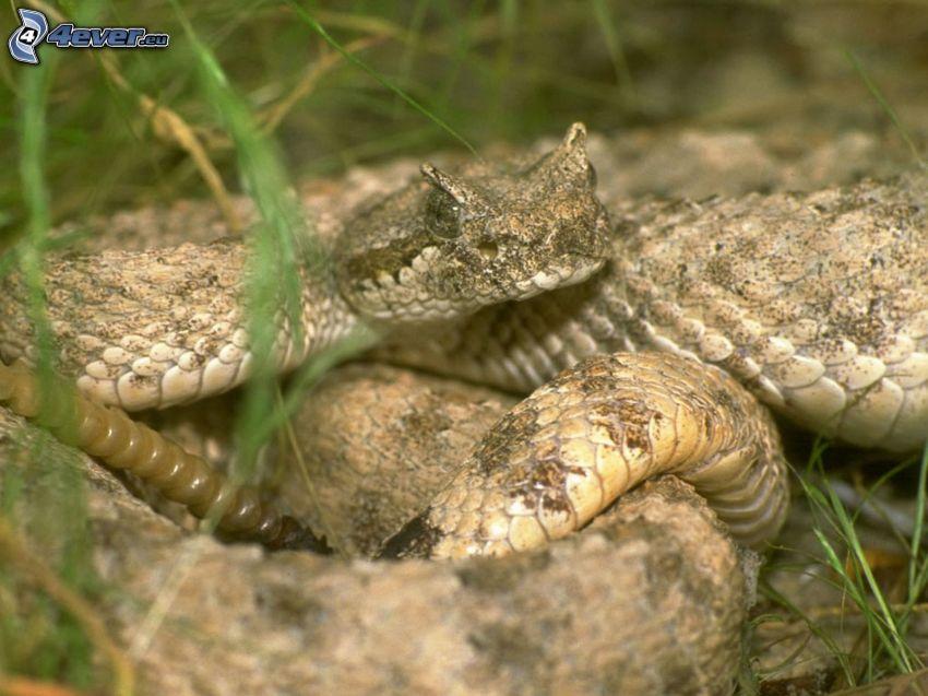 serpente marrone