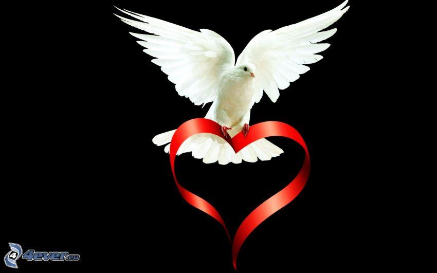colomba, ali, nastro, cuore