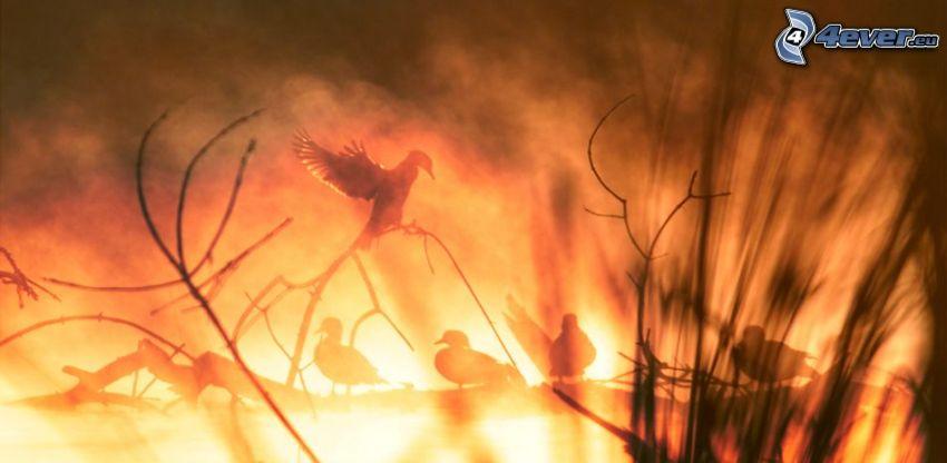 uccelli, fuoco, bagliore