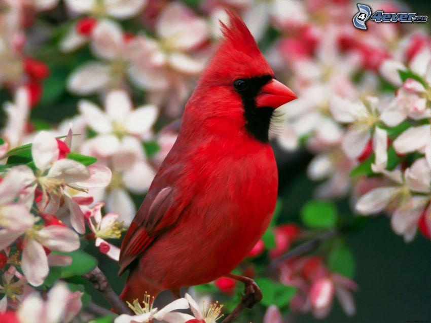 uccellino sul ramo, albero fiorente