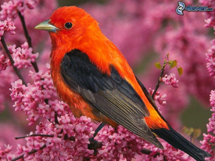 uccellino sul ramo, ramoscello fiorito, fiori rossi