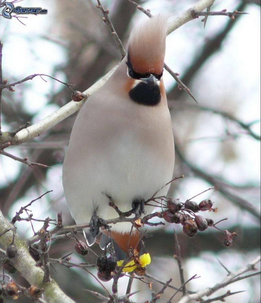 uccellino sul ramo