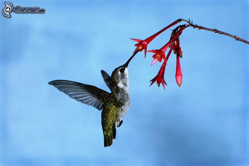 uccello, fiore