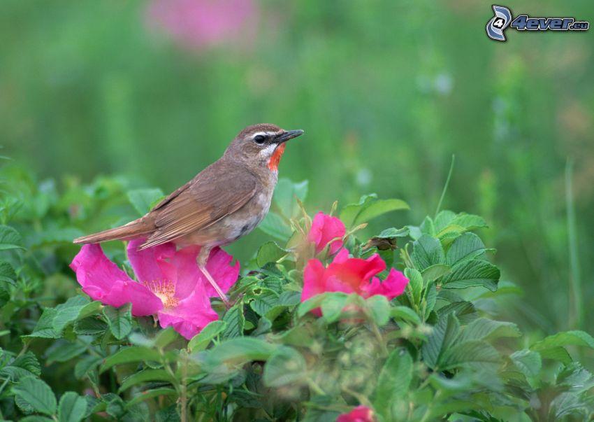 uccello, fiori rossi