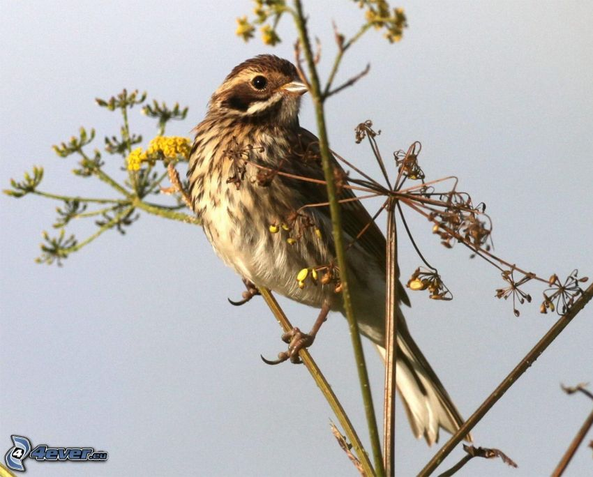 uccello, pianta