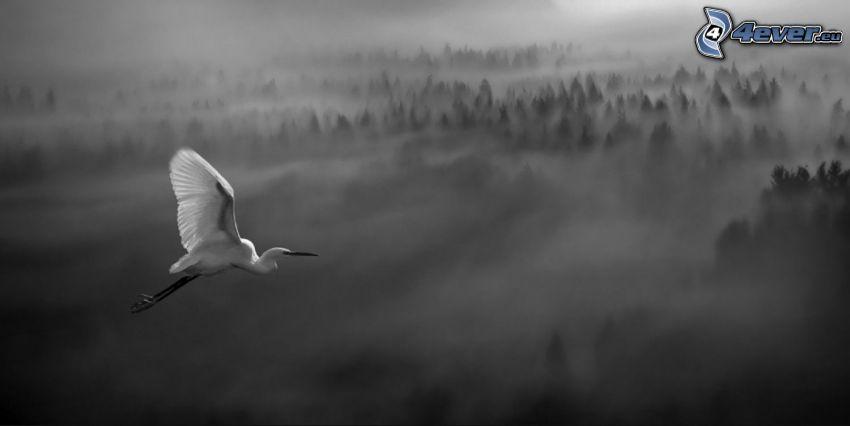 uccello, volo, nebbia sopra una foresta
