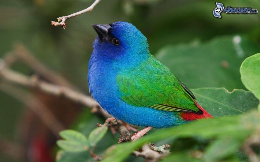uccello colorato, ramoscello