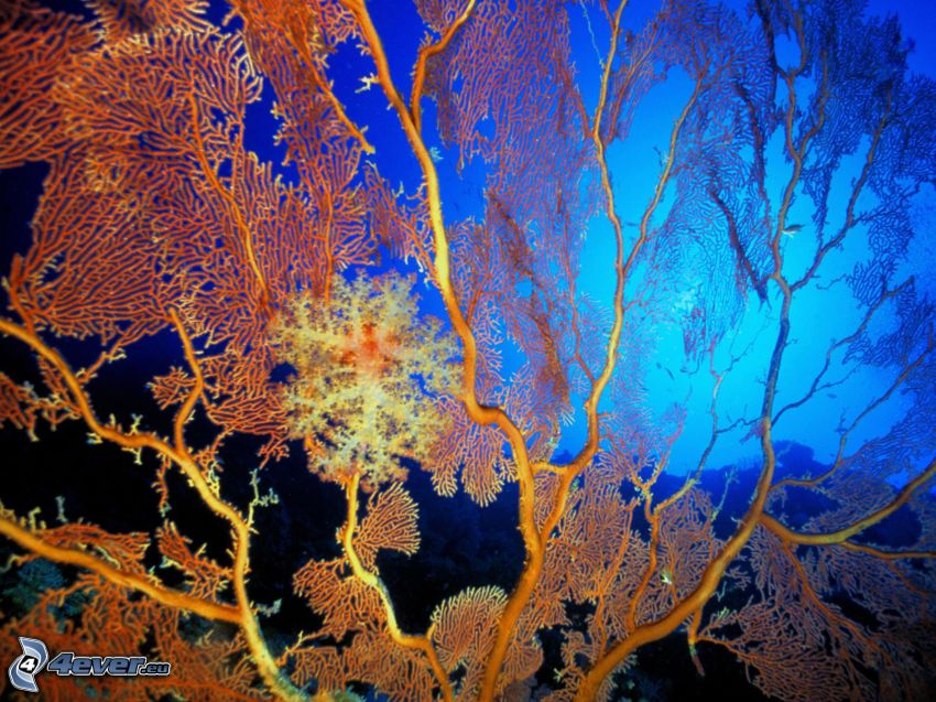 anemoni di mare