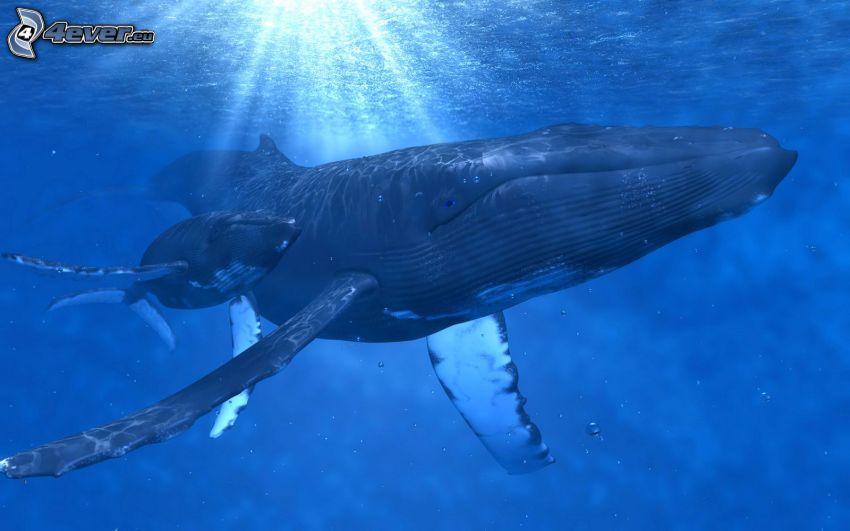 balene, mare