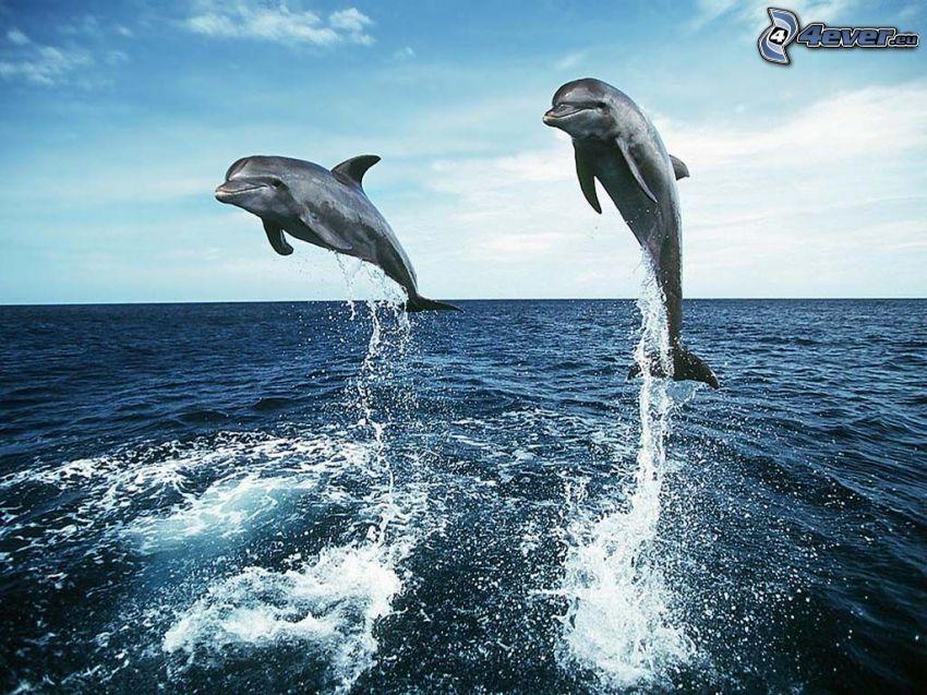 delfini, mare, salto