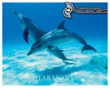 delfini, mare