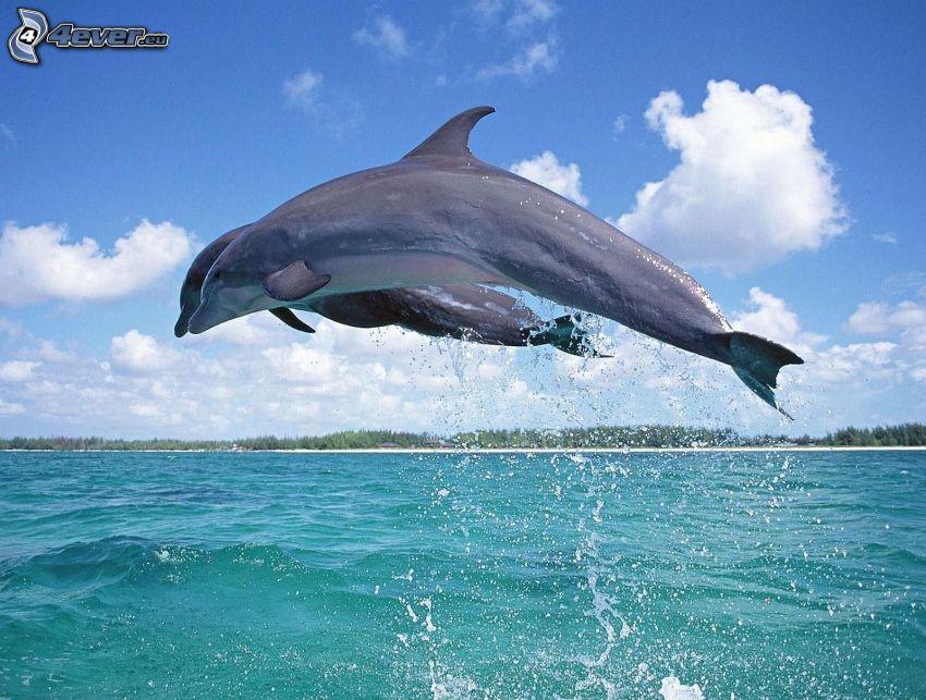 delfini, salto, acqua