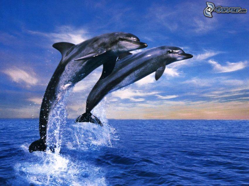 delfini che saltano, mare, oceano, sole