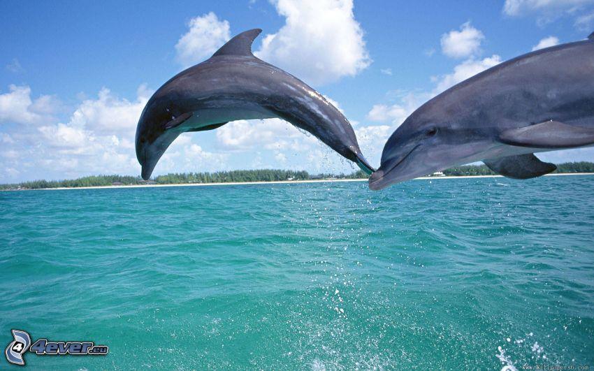 delfini che saltano, mare