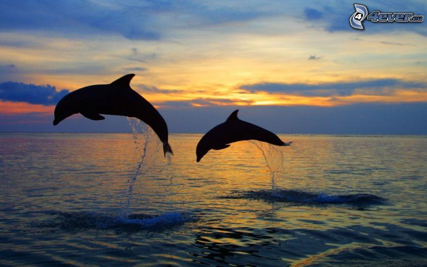 delfini che saltano, siluette di animali, mare, serata all'alba