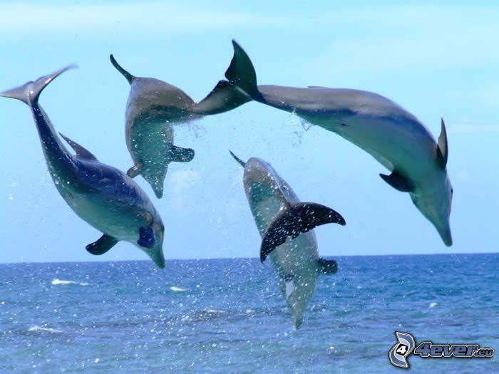 delfini che saltano
