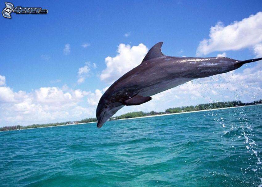 delfino che salta, mare verde