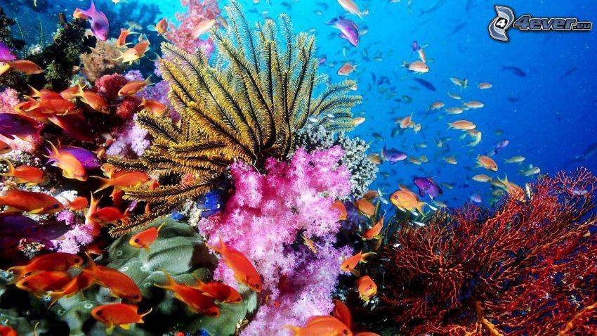 mare corallino, branco di pesci, fondale marino, anemoni di mare