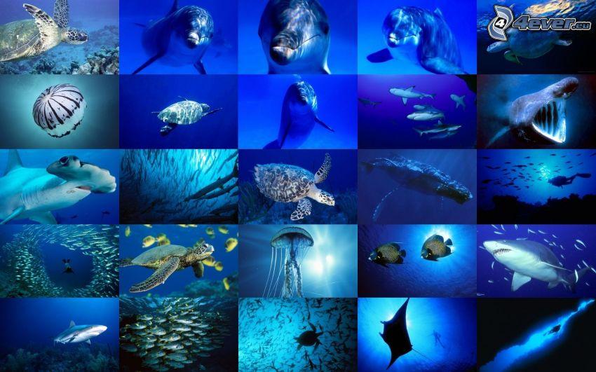 oceano, delfino, medusa, pescecane, collage