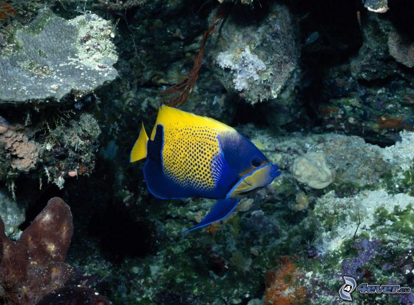 pesce, rocce