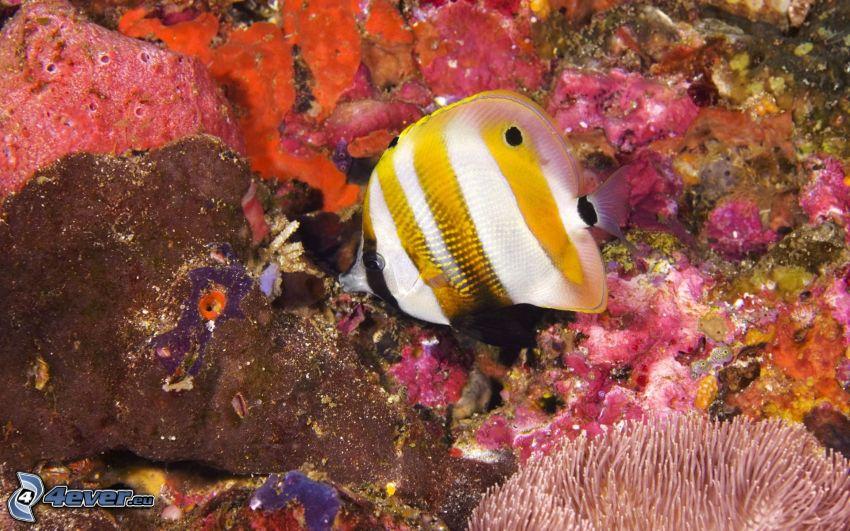 Pesce e coralli, coralli
