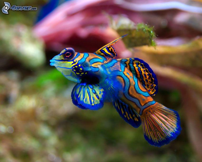 Pesce e coralli