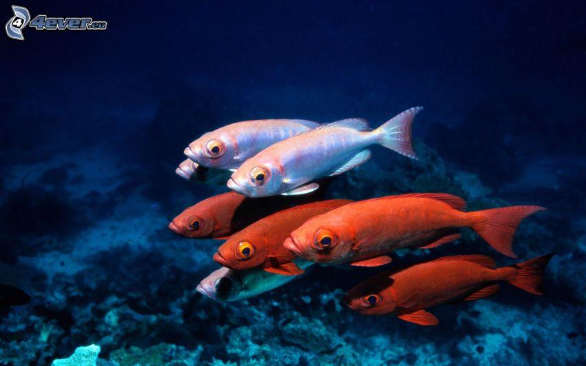 pesci, fondale marino
