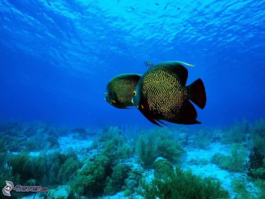 pesci, fondo marino