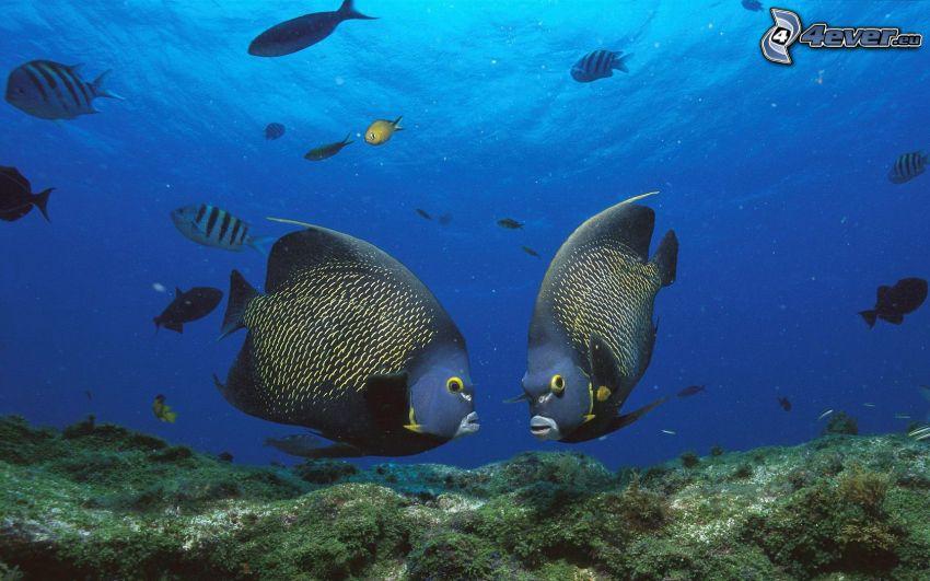 pesci, mare