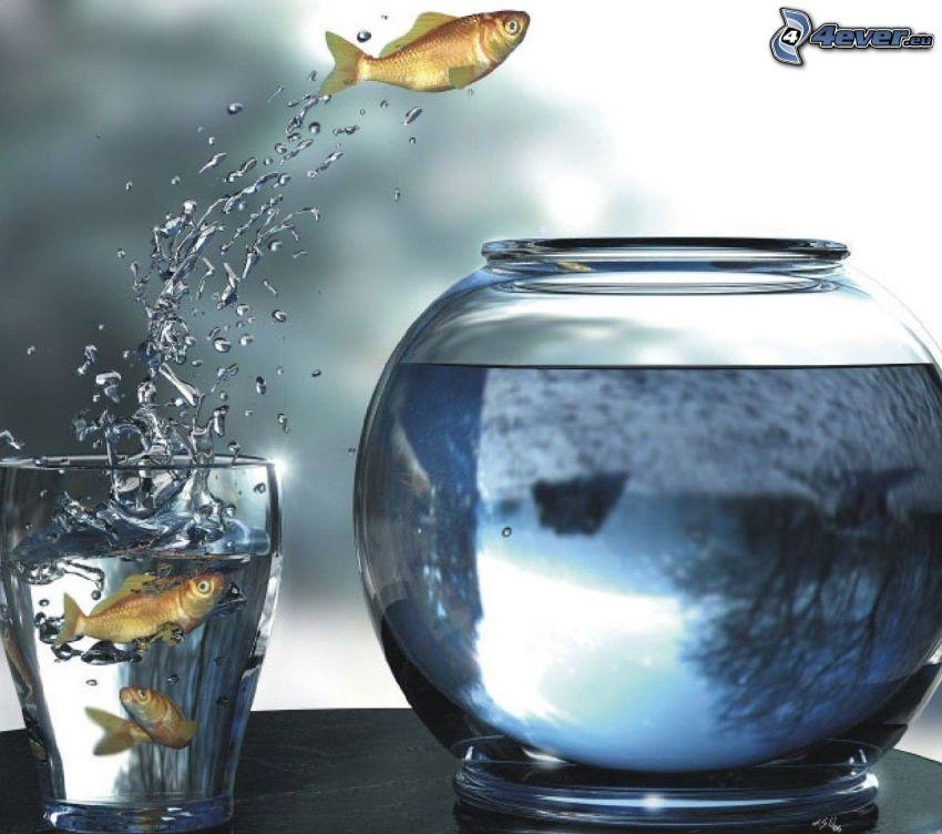 pesci, tazza, acquario, acqua