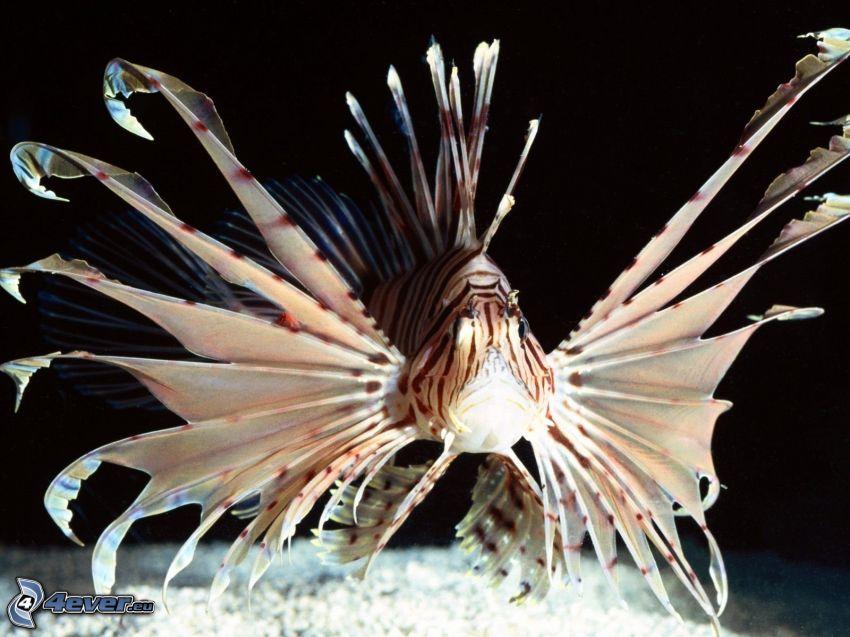 pesci predatore, Pesce e coralli
