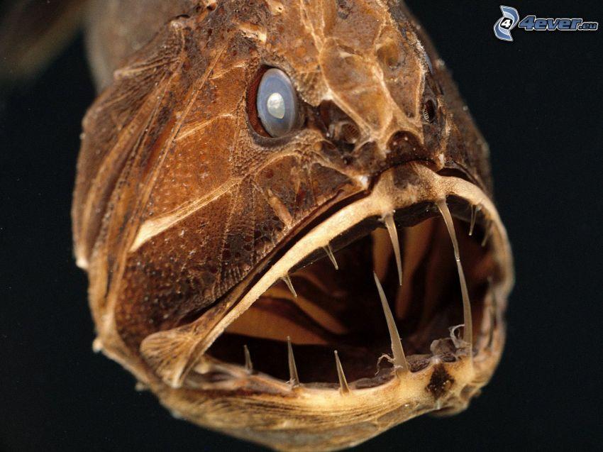 pesci predatore