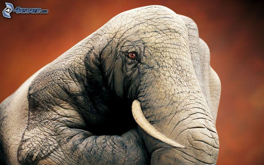 elefante, mano, bodypainting