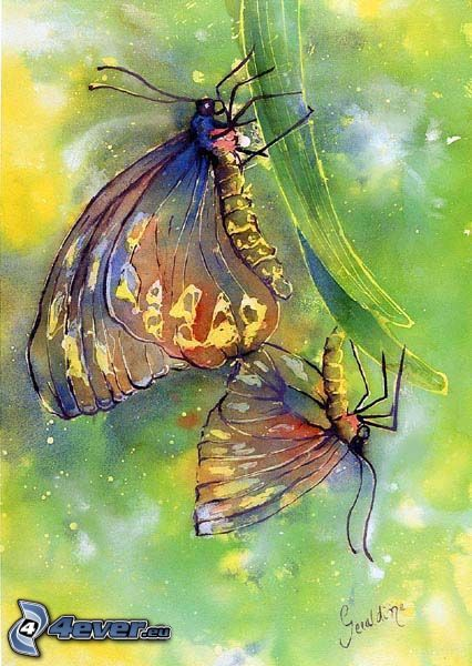farfalle, pittura, cartone animato, scarafaggio