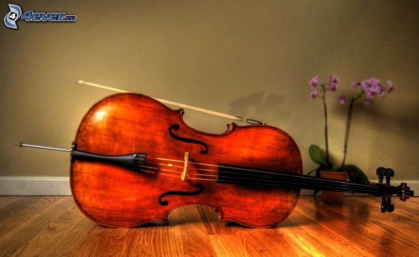 violino, orchidea